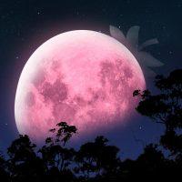 FullMoon-JuneStrawberry